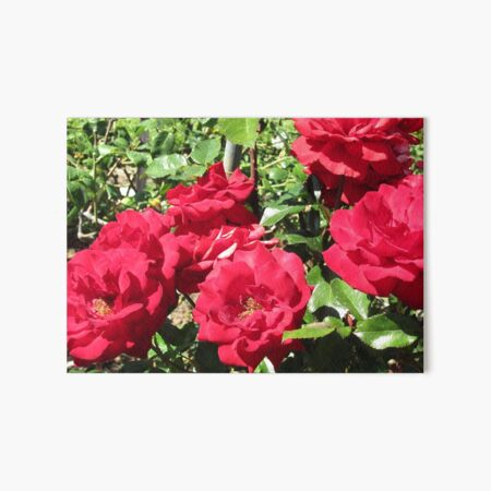 Bed Of Beautiful Red Roses Art Board Print