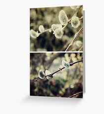Spring - Catkins Greeting Card