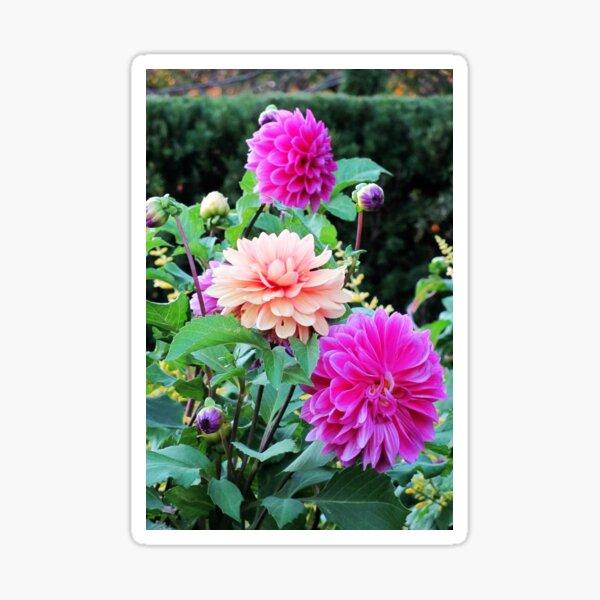 Pretty Pink Garden Sticker
