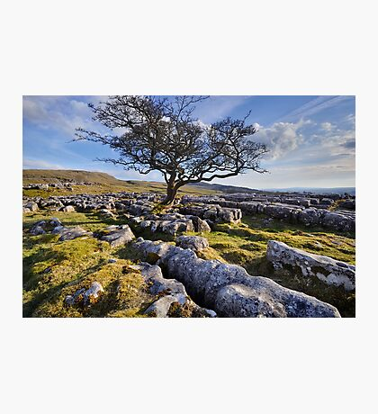 Above Langcliffe - The Yorkshire Dales Photographic Print