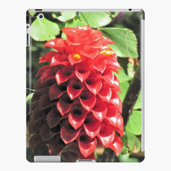 Cute Cone Flowers iPad Snap Case