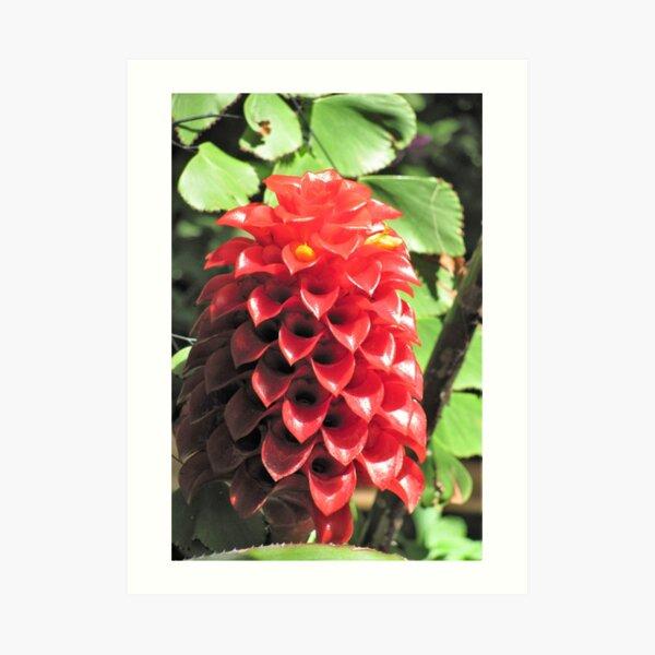 Cute Cone Flowers Art Print