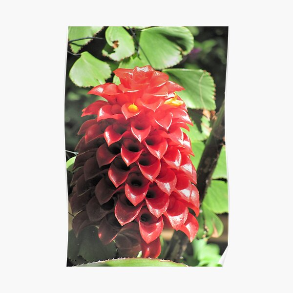 Cute Cone Flowers Poster