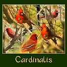 Cardinalis Collage by Trudy Wilkerson