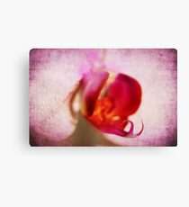 Pink textured orchid Canvas Print