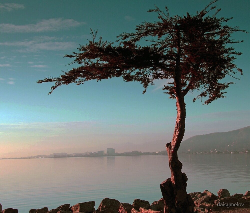 Lonely tree by daisymelov