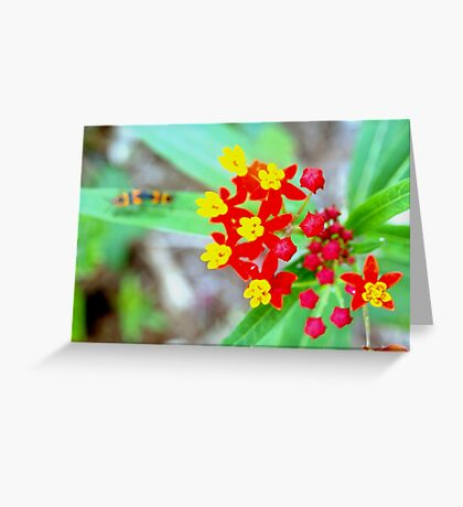 Colorful encounter Greeting Card