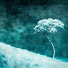 Another Lonely Tree by Carlos Restrepo