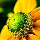 Flower Power by brucejohnson