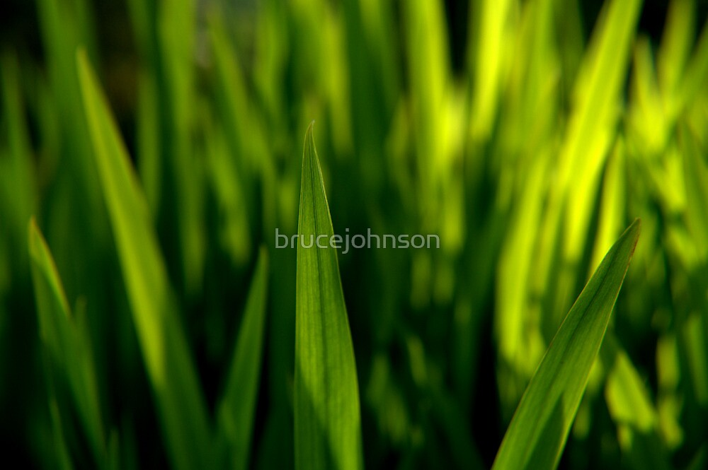 Grass is Greener? by brucejohnson
