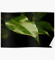 Leafy Surprise Poster
