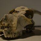 skull death drum jam by Dacey Barnes