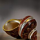 Shell by Lee LaFontaine