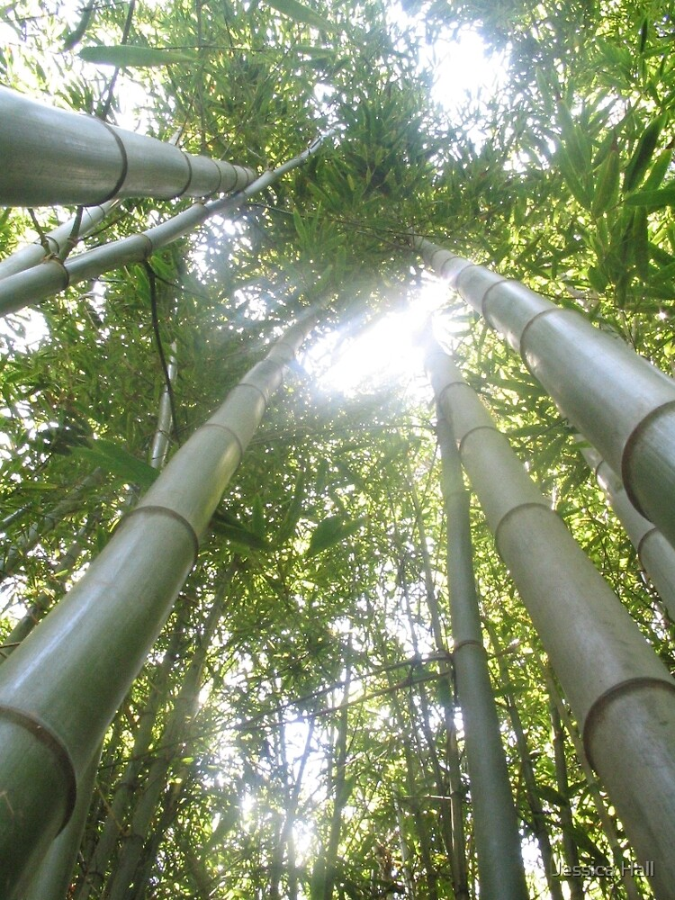 Bamboo by Jessica Hall