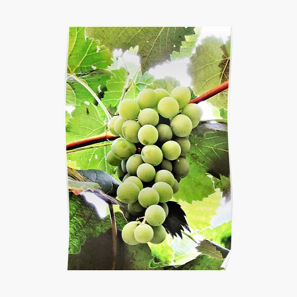 Grapes Are Art Poster