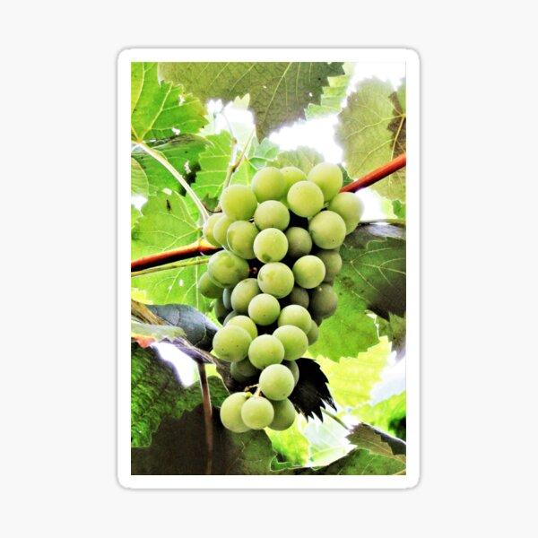 Grapes Are Art Sticker