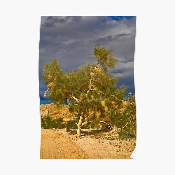 Tree in the Desert Poster