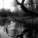 Its a swamp thing by Richard Fox