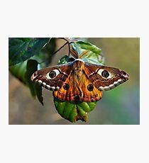 Una farfalla? Chi sa? Photographic Print
