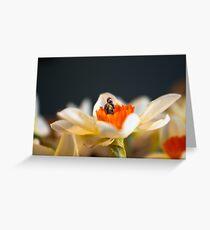 Tiny Nature Photographer Greeting Card
