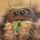 lovebug by katpartridge