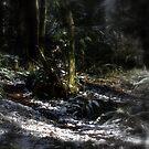 snowy Oregon forest 9 by Dawna Morton