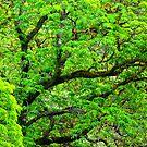 Verde by aaronarroy
