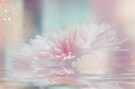 Pink Chrysanthemum by Elaine Manley