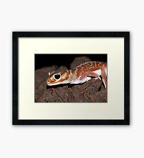 Nephrurus levis levis - Smooth Knob-tailed Gecko Framed Print