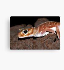 Nephrurus levis levis - Smooth Knob-tailed Gecko Canvas Print