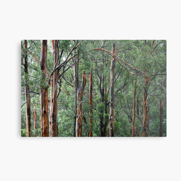 Gum Trees In The Rain Metal Print