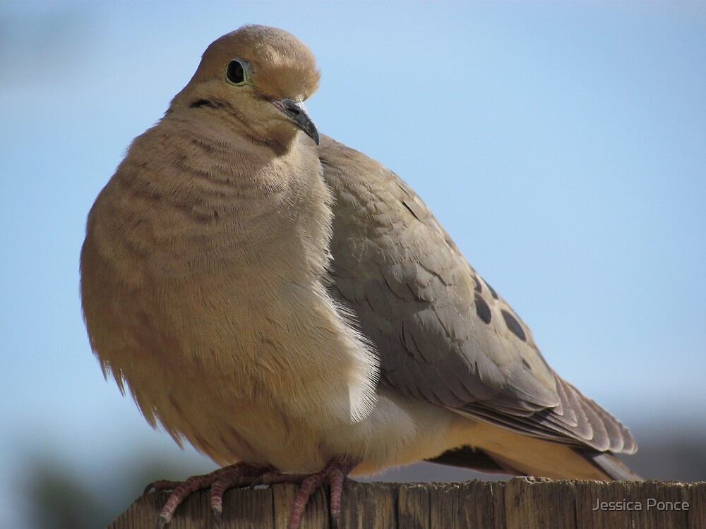 Morning with a Mourning Dove by Jessica Ponce