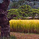 Water plants, Kanazawa, Japan by johnrf