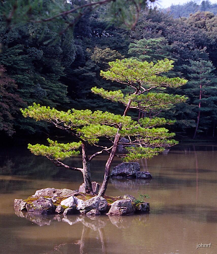 Ornamental Pine, Golden Pavilion, Kyoto , Japan. by johnrf
