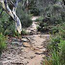 Walk This Way to Anvil Rock NSW Australia by Bev Woodman