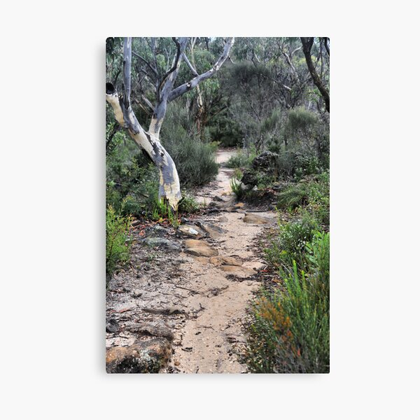 Walk This Way to Anvil Rock NSW Australia Canvas Print