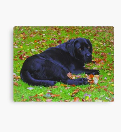 Watching the Leaves Fall Canvas Print