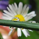 Droplet Fun. by relayer51