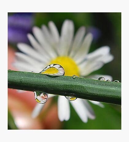Droplet Fun. Photographic Print