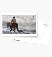 Sheep Herder, Wyoming Postcards