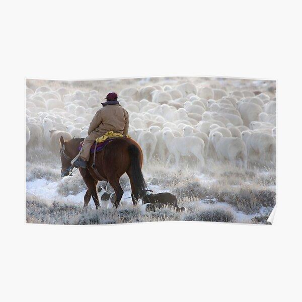 Sheep Herder, Wyoming Poster
