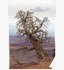 Utah Overlook Poster