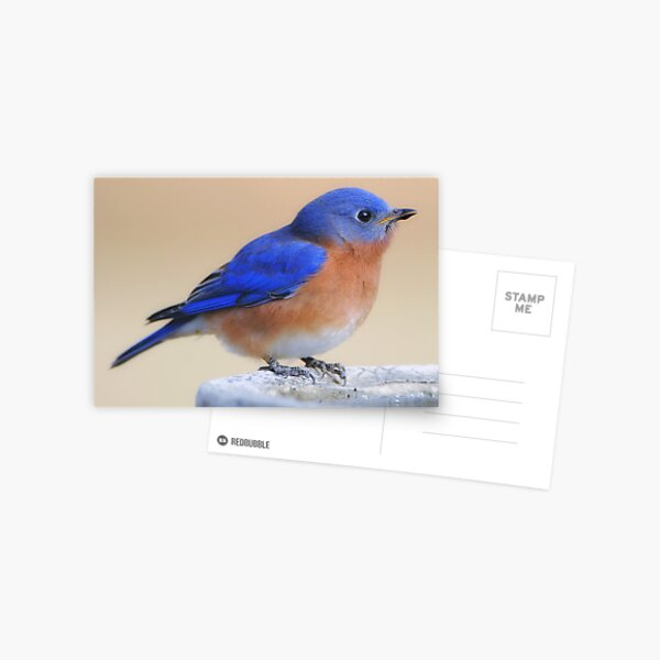 What would I do without my feathered friends? Postcard