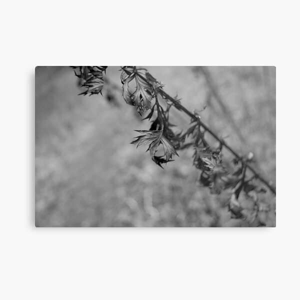 Twisted and frosty Metal Print