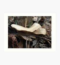 SHELF FUNGUS - CREEKSIDE Art Print