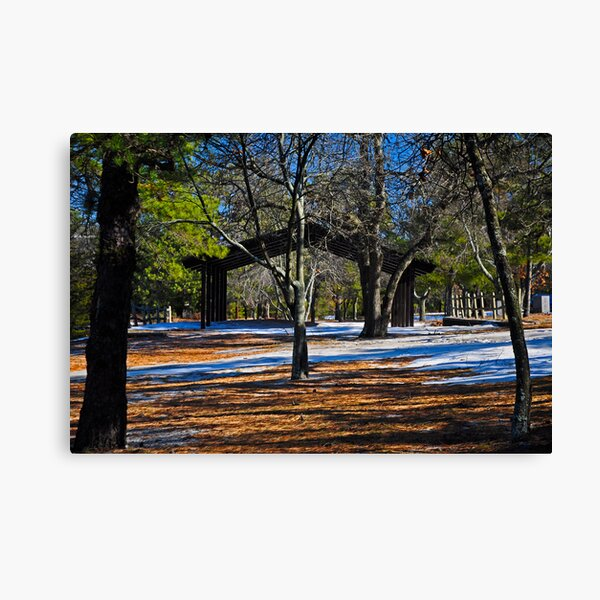 Contrast in the Pines Canvas Print