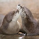 Otter kisses by Anthony Brewer