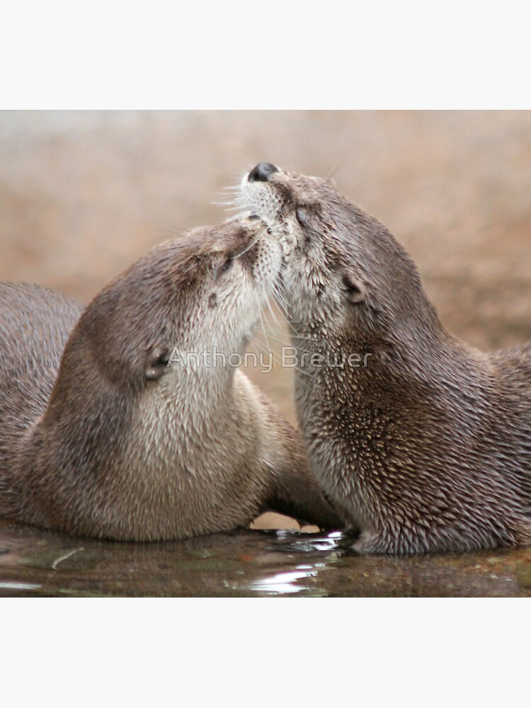 Otter kisses by dailyanimals