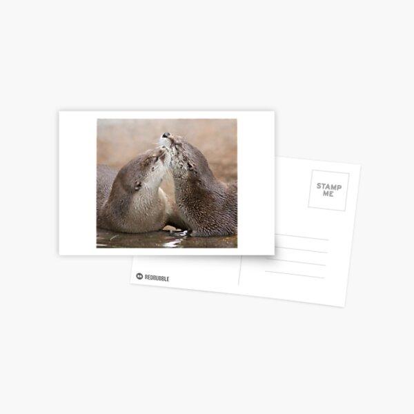 Otter kisses Postcard