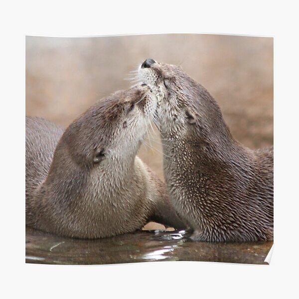 Otter kisses Poster